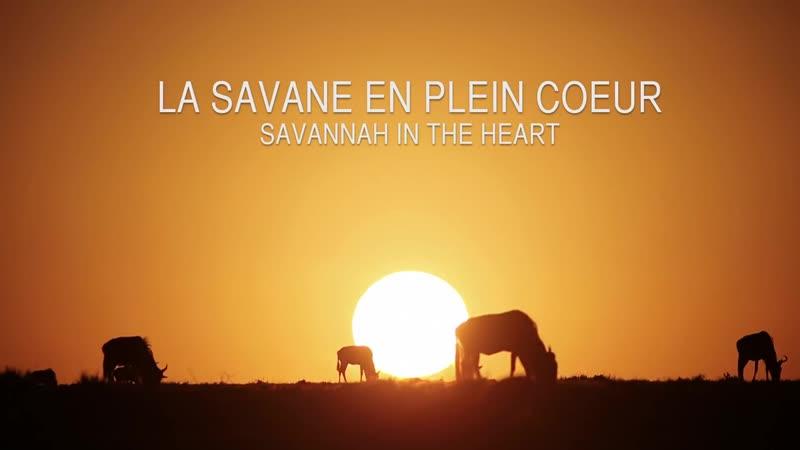 Laurent Baheux La savane en plein coeur Savannah in the