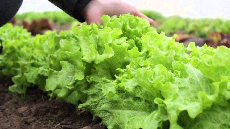 Роль трав в вегетарианском питании, изображение №1