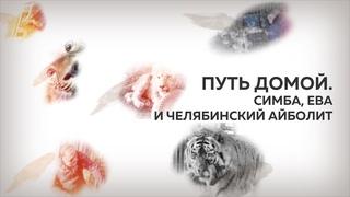 Симба, Ева и челябинский айболит. Истории спасения диких кошек.