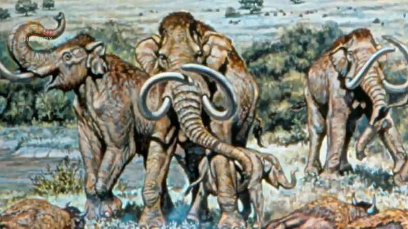 Эволюция животных Битва за жизнь Размер History Channel HD