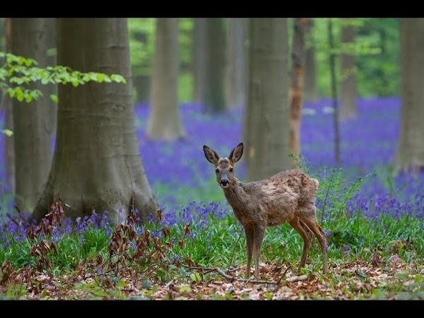 Красивая песня Чудесный лес Веселые детские песни