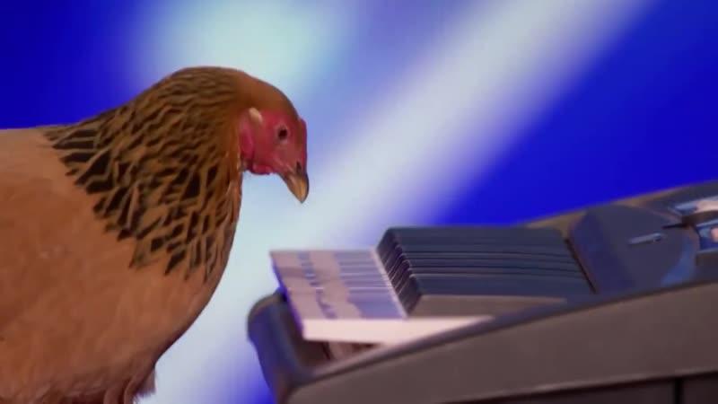 Вау! Курица играет на синтезаторе!