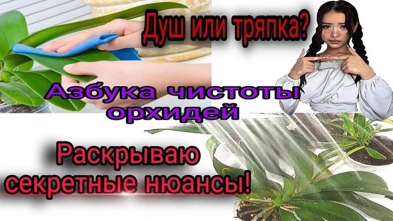 ❗️ШОК враг орхидей Как протирать пыль правильно Почему протираю а не мою под душем ❓