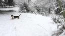 Пальмы в снегу зима в Сочи