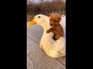 Вот такая дружба у животных. Редкие кадры.
