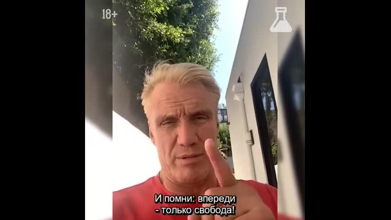 Дольф Лундгрен, Чарли Шин и Винни записали видео в поддержку Шугалея