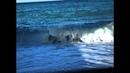 Гурзуф-жемчужина у моря