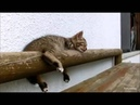 Смешные кошки! Доброе утро!