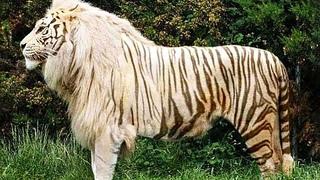 50 Самых Редких и Невероятных Животных в Мире