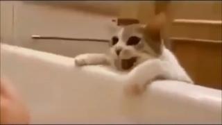 Кошка думает, что хозяйка тонет в ванной! Ее реакция покорила всех!