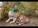 ЭКСТРЕННЫЙ ВЫПУСК Родила амурская тигрица МЫ В ВОЛЬЕРЕ Amur tigress gave birth