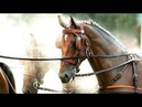 Miles Above You Equine Driving Music Video