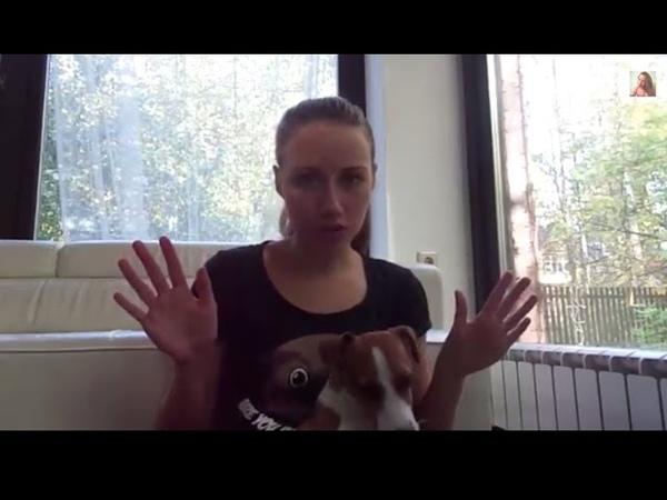 Собака одна дома Видео со скрытой камеры Мой опыт Советы кинолога Джина грызет носки