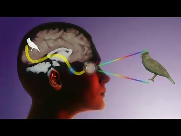 Тайна восприятия Сознание Сновидения Сущность материи