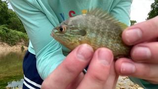 Femboy Fishing Episode 13 - VERY AGGRESSIVE FISH