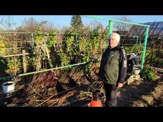 Искореняющая обработка винограда в зиму перед укрытием