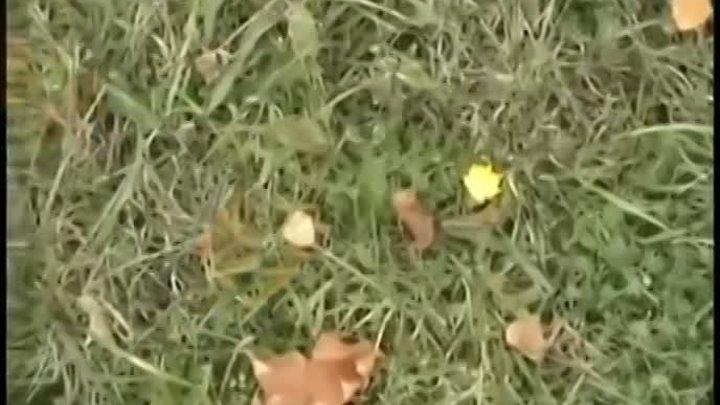 СЛАДКИЙ СОН босоногая девчонка