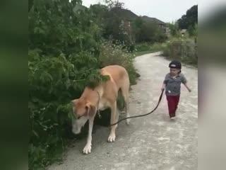 Шаг собака-пять малыш))