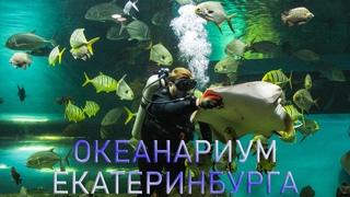 Океанариум Екатеринбурга | Ураловед