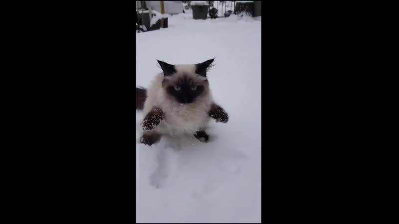 Холодно товарищи холодно Александр Блок Двенадцать