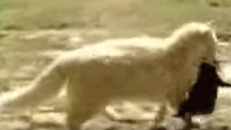 Эта кошка воровала соседских щенков, вскоре они поняли почему
