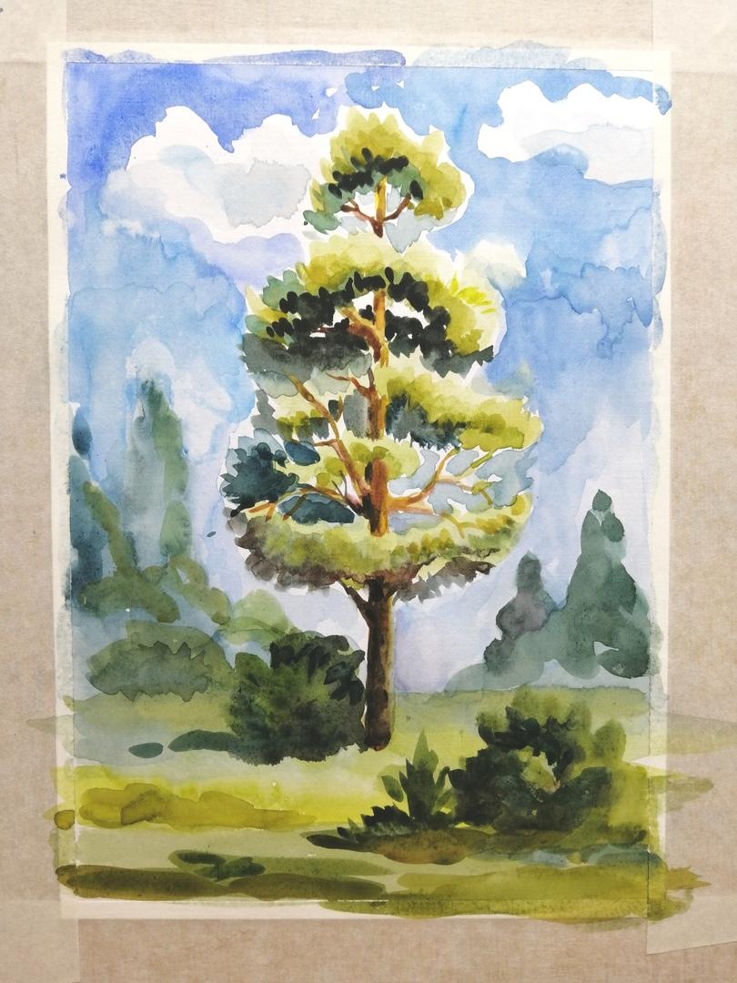 ОНЛАЙН-УРОК по рисованию «Сосна», изображение №9