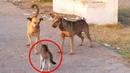 Кот в Деле / Кот против Медведя, Собаки, Змеи, Осьминога