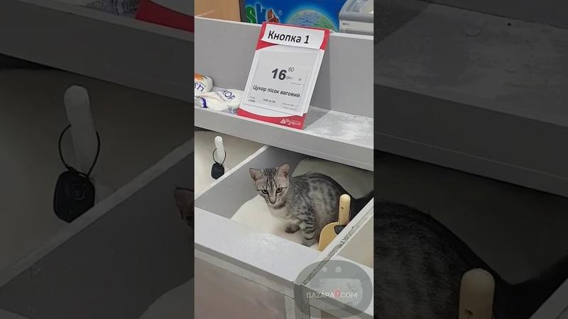 Кот нассал в весовой сахар в киевском супермаркете