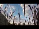 Охота утром на гусей. 28.09.2013. Часть 2.