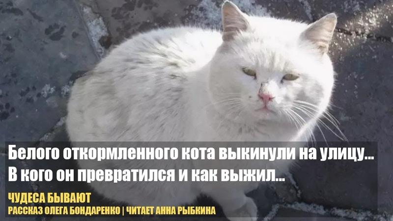 Белого откормленного кота выкинули на улицу В кого он превратился и как выжил