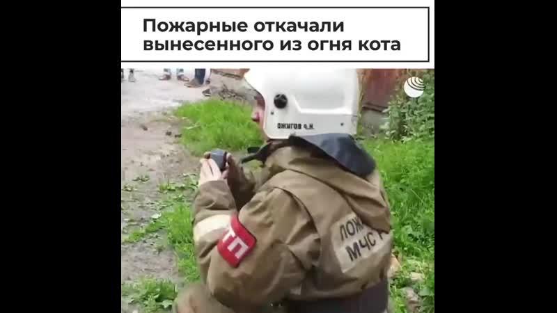 РИА Видео Томские пожарные спасли кошку и собаку из горящего дома Их хозяева уехали за город и жив mp4