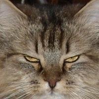 Фотография профиля Вовки Березкина ВКонтакте