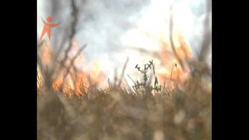 За тиждень на Рівненщині внаслідок спалювання сухої трави та стерні зареєстровано 77 пожеж