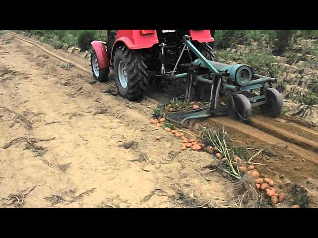 Burgonya betakarítás 2012. (Potato harvest) MTZ 320.4 Kuxmann betakarító
