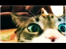 HILARIOUS Cat Interrupts Yoga Session
