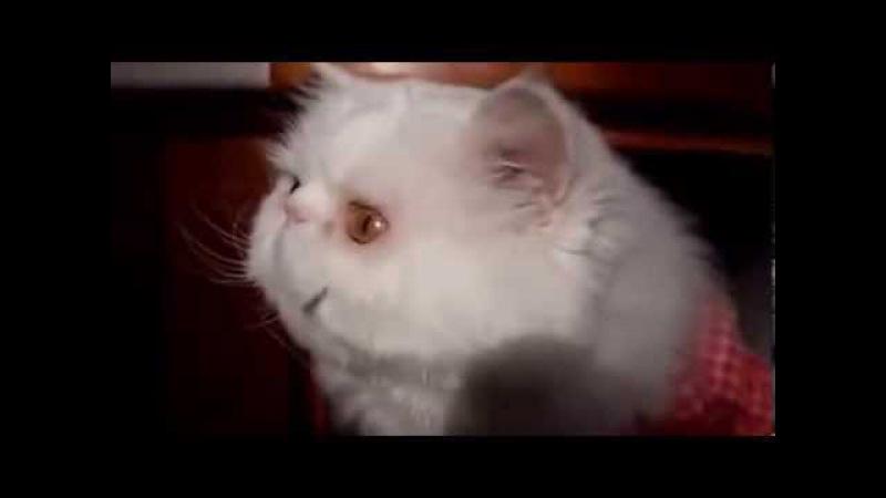 Говорящие коты Talking cats Подборка Недди Без муз сопровождения