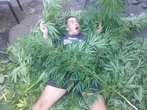 Фото смешное конопля коноплю вырастить в огороде