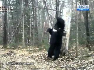 Медведь-почесун на Земле леопарда