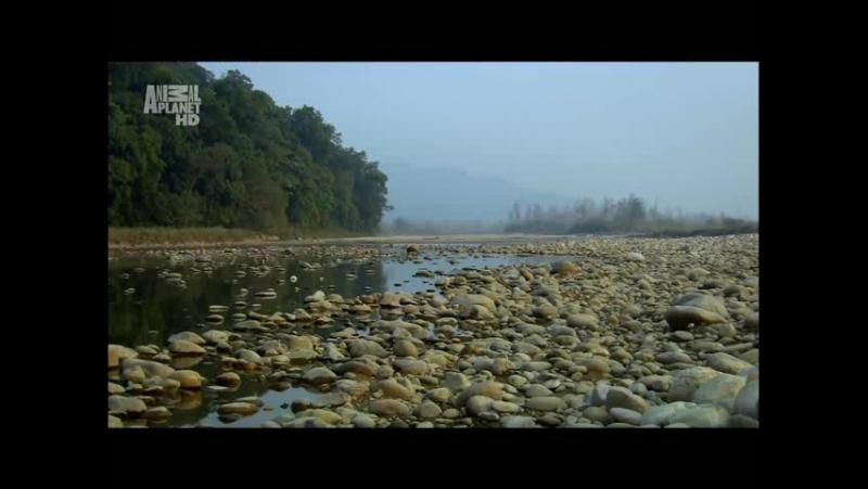 В дебрях Индии Ганг река жизни