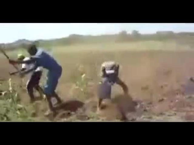 Cornfield Digging