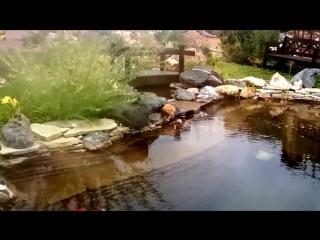 искусственный пруд с ручьём и водопадом
