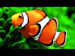 Stunning Clown Fish Aquarium & The Best Relax Music - 2 Hours - Sleep Music - HD 1080P