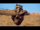 Смешные истории про животных и людей
