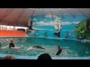 Масса впечатлений в дельфинарии Джубги