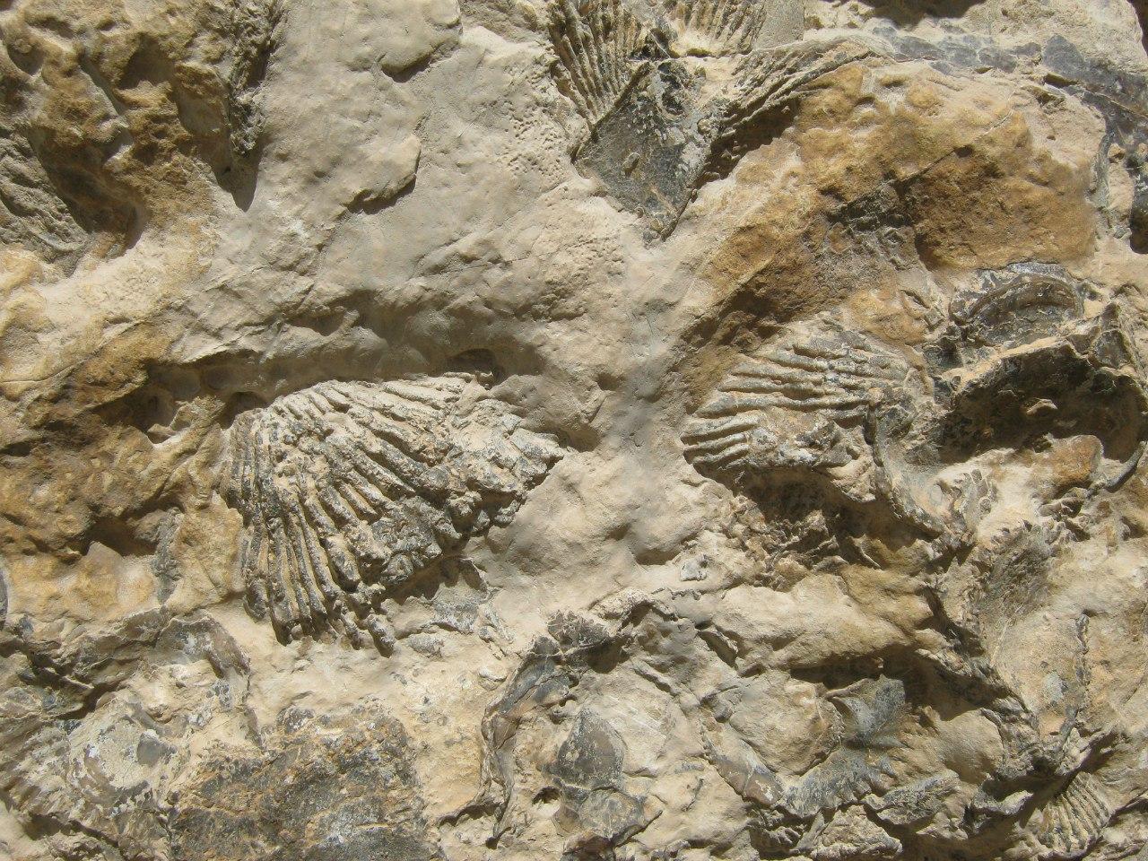 окаменевшие организмы в пустыне в Иордании