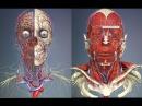 3D Анатомия человека - голова и шея. / 3D Anatomy human - head and neck. 3d fyfnjvbz xtkjdtrf - ujkjdf b itz. / 3d anatomy human