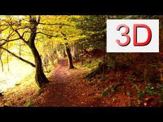 Ultra HD 3D Film SEPTEMBER FOREST WALK (4K Resolution)