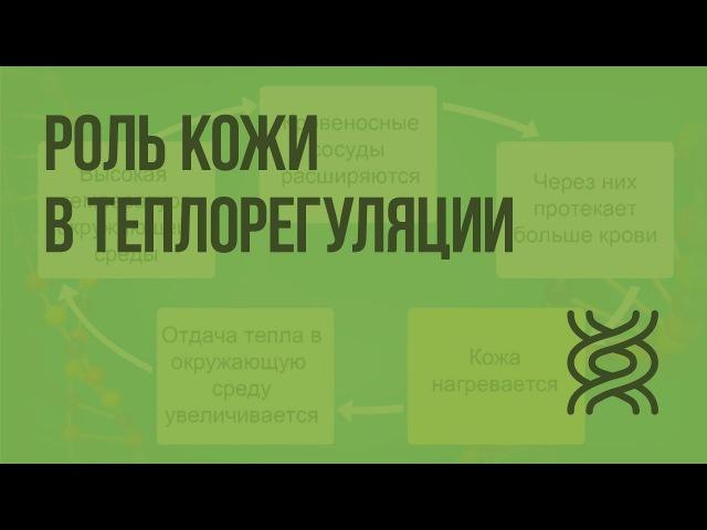 Роль кожи в теплорегуляции Видеоурок по биологии 8 класс