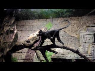 Воронежский океанариум, обезьяны