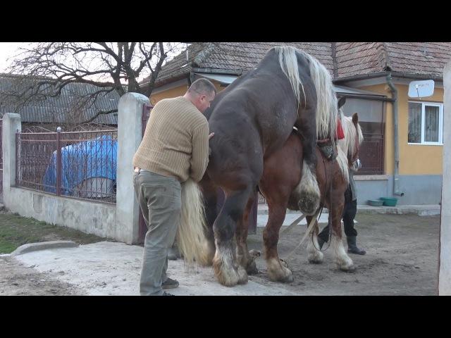 Monta naturala Armasar deosebit ce se afla in Floresti Cluj 2017
